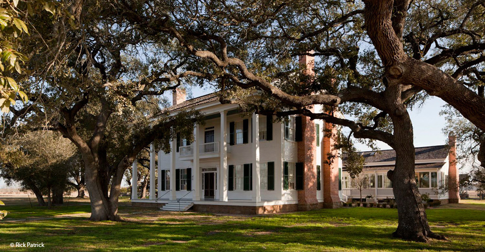 Ancient Oaks, Wiley Hill Homestead